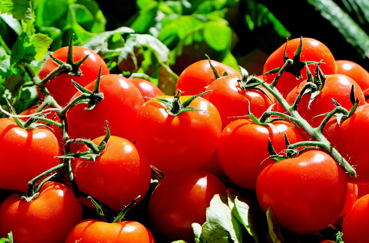 Quanto cuocere i pomodori?